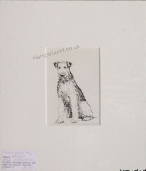 Airedale sitting - Air O1-  1960's print by Bridget Olerenshaw